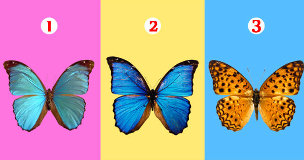The butterfly you choose can reveal the hidden sides of your personality
